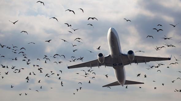 Flugzeug mit 230 Passagieren landet in Maisfeld