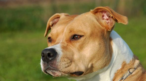 Opfer von Hundeattacke in Hannover laut Obduktion an Bissverletzungen gestorben