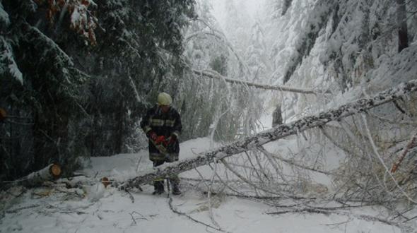 Leifers: Bäume knicken unter Schneelast um - Stromleitung beschädigt