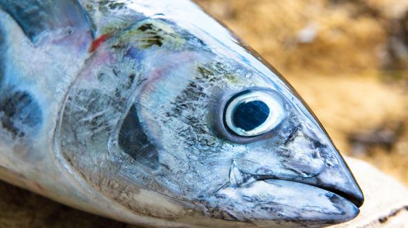 Unbekannte fischen kompletten See leer: Mithilfe von Strom