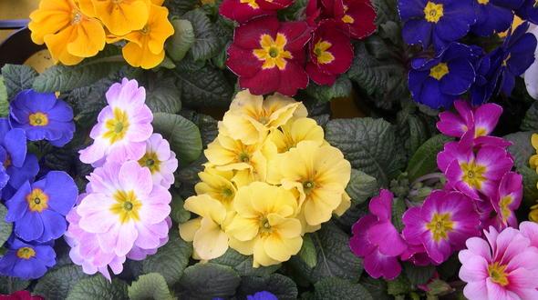 Gärtner verstecken Blumen am Valentinstag